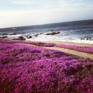 May 2012 - Monterey CA
