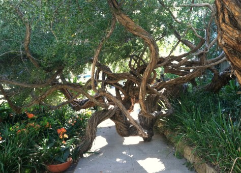one big tree