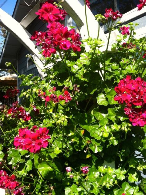 My Secret Garden - 04